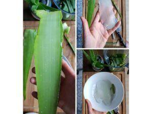 خواص شگفت انگیز گیاه آلوِِئه ورا چیست | چگونه ژل آلوئه ورا را بدست آوریم | چه طور با آلوئه ورا پوستی شاداب داشته باشیم | روش استفاده از آلوئه ورا برای انواع پوست های مختلف |